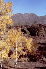 fall colors (h willome) Tags: 2005 arizona sunsetcrater sunsetcraternationalmonument