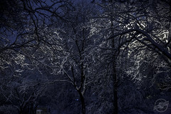 Haunt of the Storm (CJ Schmit) Tags: trees winter snow storm cold wet wisconsin night canon evening frozen lowlight branches milwaukee wauwatosa flocking snowbranches 5dmarkii canon5dmarkii tamron70200mmf28dildifmacroaf cjschmit wwwcjschmitcom cjschmitphotography naturalflocking
