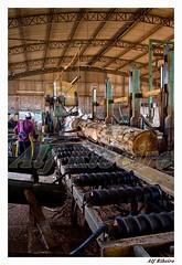 0021 - 0207 (Alf Ribeiro) Tags: brazil brasil digital dia cor madeira amricadosul agribusiness agronegcio alfribeiro