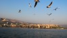 Seagull on Sea of Galilee