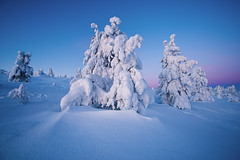 Winter dawn (Thierry Hennet) Tags: morning pink blue winter sky white snow tree texture zeiss finland landscape outdoors dawn frozen frost sony frosty structure snowcapped lapland clearsky a900 cz1635mmf28