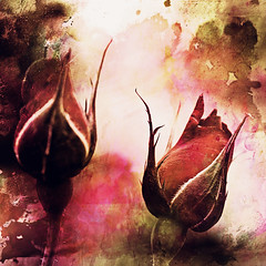 Dare to be different (Flick Vlooi) Tags: flowers roses painterly art texture floral watercolor square grunge buds desaturated memoriesbook visionqualitygroup visionquality100 creativephotocafe