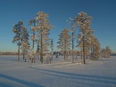 130209_Lappland_45