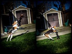 Fetch (melekzek) Tags: dog maya ef50mmf14 fetch canoneos5dmkiii