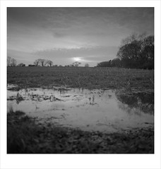 winter field (Nick Moys) Tags: trees landscape flood norfolk outoffocus ilfordhp5 mamiyac220 logged 55mmlens 2water bawdeswell commonlane moerschfinol