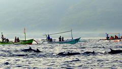 Des dauphins (a.laruelle) Tags: bali bateau dauphins ocan