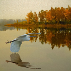 Egret Rising (Slimdandy) Tags: utatafeature