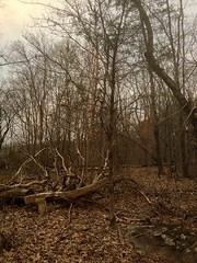 natural (LauraSorrells) Tags: wood trees favorite nature forest march log woods branches grace fallen sere iphone flanneryoconnor 2013 carterslake somberbeauty