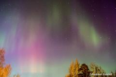 Aurora Borealis a long way south 1 (A.Sundell) Tags: trees light sky color tree forest spring pentax sweden himmel sigma wideangle swedish astro astrophotography aurora skog sverige polar västerås träd färg borealis västmanland norrsken surahammar sigma20mmf18exdg Astrometrydotnet:status=solved pentaxk5 Astrometrydotnet:version=14400 sigma2018exdg Astrometrydotnet:id=alpha20130348667678