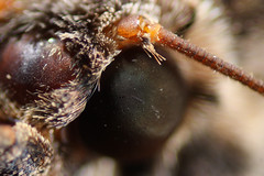 Macro Extension Tube + raynox dcr ( [ Libya Photographer ]) Tags: macro canon eos tube extension 1855 dcr   raynox 60d      alagouri