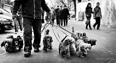 Houhai, Beijing (Jrme Pierson) Tags: china street leica travel people urban dog pet pets white man black dogs animals chinese beijing culture summicron m8 28 rua   chinois rue houhai asph hombre cultural chine homme  vity  m82