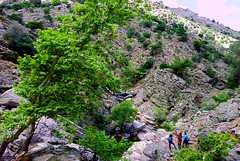 View of Dipotama with new plane trees after the flood of 2010 (angeloska) Tags: ikaria may hikingtrails opsikarias aegean greece signage      chalares upperchalares dipotama ratsos   swimmingholes