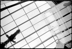 lady long (look-book) Tags: lookbook analog blackandwhite sw analogous analogue anlogo film trix d76 fotos foto analogicas bw selfdeveloped blackwhite black white blancoynegro noiretblanc kb 24x36 135 duesseldorf dsseldorf flughafen
