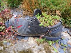Rcup (Doonia31) Tags: chaussure pot fleurs plantes plantations vgtaux nature terre joubarbe utile rcupration original