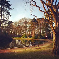 Park Life (carolinegiles1) Tags: silence nature photography iphone tree trees water lake spring bench park