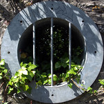 overgrown  port hole thumbnail