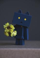 mao (here.heidin) Tags: danbo danboard nyanboard figures cat