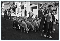 Autrefois le Couserans (2016) (PierreG_09) Tags: arige pyrnes pirineos couserans autrefoislecouserans fte tradition dfil portrait nb bw noiretblanc monochrome conversion berger brebis troupeau