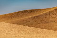 Palouse Abstract (Pedalhead'71) Tags: whitmancounty wheat wheatfield hills abstract landscape palouse washington