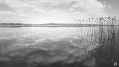 (lotl.axo) Tags: kodaktmax3200 deutschland schwarzweis landschaft reisefotografie see wasser schilf wolken vscofilm mecklenburgischeseenplatte mecklenburgvorpommern natur tollensesee germany bw blackandwhite clouds lake landscape monochrome nature reed sw travelphotography water