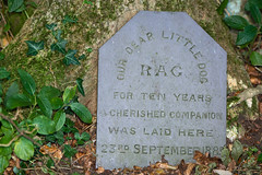 Tombstone to pet dog buried in 1885 (Ian Redding) Tags: victorian animals cemetery child children creatures dead death dog engraved gravestone learning log memorial nineteenthcentury parenting period pet remembering sadness slate stone tombstone wood woodland
