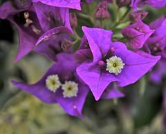 Madeira (Juanito Moore ( John Moore )) Tags: flower moore botanicalgardens juanito jardimbotanicodamadeira juanitomoore