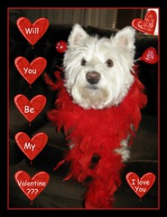 """2/12B ~ """"Valentine's Day Wish"""" (Explore #202) (ellenc995) Tags: friends red love riley westie explore westhighlandwhiteterrier valentinesday february14 coth supershot akob abigfave citrit pet500 pet100 platinumheartaward thesuperbmasterpiece 100commentgroup piexcellance yearofholidays heavenlycaptures coth5 naturallywonderful whydtta thesunshinegroup 12monthsfordogs13"""
