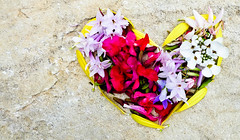 45 (2.14) (Kalyna Harasymiv) Tags: pink summer urban flower colour macro art love nature yellow rock garden purple heart violet australia valentine romance petal lilac canberra thursday bluebell