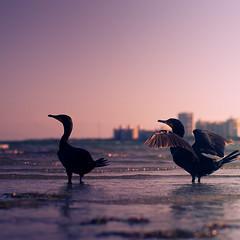 Miami (34 of 123) (The Paul Miller) Tags: ocean city sea summer sun seagulls beach water birds coast mar fly sand waves florida miami south tide flight salt playa atlantic avian