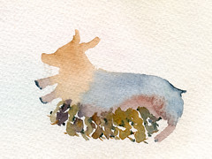 The life of a newborn baby pigs (a better hell) Tags: baby animals pig newborn watercolour breastfeeding