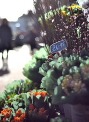 Flowers. (Vic 2205) Tags: flowers light orange signs colour green floral yellow contrast 50mm focus brighton dof shine bokeh foliage shops gleam manual manualfocus pricetag gleaming lanes somuchlight focusonflowers bokehwhores