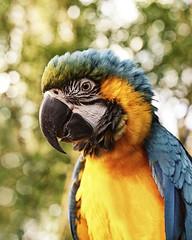 (martin moxness) Tags: photography martin parrot ara moxness