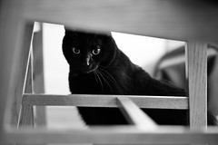 Peeping (Junnn) Tags: portrait blackandwhite bw pet cats black cat truffles 85mmf18 canonef85mmf18usm canoneos5dmarkii silverefexpro2