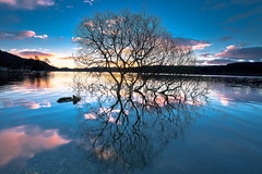Reflections on Blue (PeterYoung1.) Tags: uk blue trees nature beautiful reflections landscape scotland scenic ard lochard kinlochard
