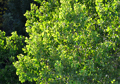 "Greeen • <a style=""font-size:0.8em;"" href=""http://www.flickr.com/photos/59184155@N03/8516879240/"" target=""_blank"">View on Flickr</a>"