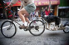 Weeeee (eych-you-bee-ee-ahr-tee) Tags: street winter film vancouver analog 35mm chinatown toycamera expiredfilm c41 22mm fujifilmsuperiaxtra400 2013 epsonv600 superheadzwideyellowpeace