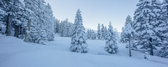 Whiteout (Tobias Knoch) Tags: blue schnee panorama white cold ice st canon out eos mark iii shift land 5d 24 24mm blau tobias tilt kalt eis gallen whiteout tse fichte sankt appenzell appenzeller sntis weis knoch schwgalp