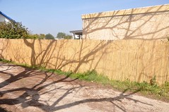 Michmoret 2013 (Gali-Dana) Tags: street shadow tree fence israel  michmoret