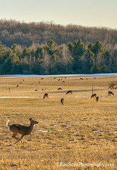 Spring! (Ken Scott) Tags: winter usa snow march michigan deer crop voted leelanau backpage 2013 fhdr sbdnl sleepingbeardunenationallakeshore mostbeautifulplaceinamerica