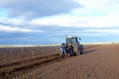 0065VIÑEDOS-plantar-injertos-(22-3-2013)-P1020070 (fotoisiegas) Tags: viticultura viñas viñedos cariñena plantar injertos fotoisiegas lospajeras