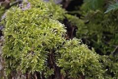 DSC_0723 (dan-morris) Tags: wood sunset white black tree green wet field grass forest photo leaf moss spring nikon shoot berries bokeh bark dew 1855mm dslr depth vr damp f3556g 1855mmf3556gvr d3100