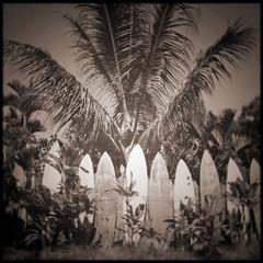 Vintage Maui Surfboard Fence (marydenise6) Tags: vacation holiday island hawaii maui hawaiian infocus highquality