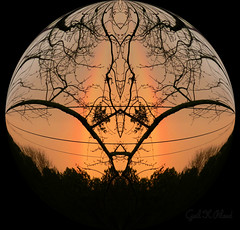 New Day (gailpiland) Tags: trees sky photoshop branches mirrored autofocus thegalaxy rainboe flickraward dreamphoto theperfectphotographer thebestofday gnneniyisi gailpiland ringexcellence flickrstruereflection1 rememberthatmomentlevel1 rememberthatmomentl1