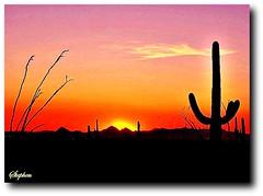 ~ Sunset in the desert ~ (stephgum32807) Tags: sunset arizona tramonto sonnenuntergang desert pôrdosol kodachrome puestadelsol закат coucherdusoleil ηλιοβασίλεμα zachódsłońca