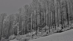 Forrest with snow and fog (akarakoc) Tags: light white snow black cold tree nature fog canon switzerland lowlight forrest snowy swiss low foggy 24105 24105mm canonphotography uploaded:by=flickrmobile flickriosapp:filter=nofilter