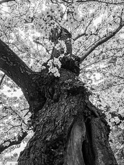 Blossom Tree B+W (Leading Line Photography) Tags: park old light vacation portrait blackandwhite usa sun white black color detail macro tree art architecture contrast vintage dark cherry landscape four photography washingtondc photo dc washington memorial raw unitedstates bright photos blossom bokeh live cell olympus basin line haunted prison micro jail cherryblossom 12mm 20 18 tidal leading 43 omd creamy thirds easternstatepenitentiary penitentiary 75mm 17mm em5 microfourthirds olympusomdem5 leadinglinephotography olympus12mm20