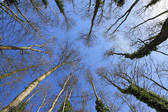 Meeting Up (Jonny Hirons) Tags: greatbritain blue trees england sky green woodland point outdoors togetherness place unitedkingdom central meeting ivy competition somerset growth trunks meet ascension congestion crowded assembly competing meetingplace congested focal meetingpoint converging reachforthestars overcrowding overcrowded lowpov convergingverticals comingtogether changeyourpov competingforspace