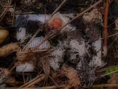 Dementia (hedbavny) Tags: family stilllife plant art buch lesen austria book photo leaf stillleben foto fotografie decay kunst fabrik familie laub grandfather read ruine urbanexploration installation memory page mementomori withered bild decomposition temporary blatt baden schrift derelict arrangement pasfoto artinstallation deutsch erinnerung vanitas denkmal urbex verrottet spinnerei konsum seite vergnglichkeit alzheimer wahrzeichen druck trove verfall baumwollspinnerei verwelkt vergessen verwandtschaft fotoalbum vertrocknet buchstabe denkmalschutz industrieruine industriedenkmal temporr merken spinningmill grosvater erinnerungsalbum urbexaustria brunobauer konsumverein hedbavny ingridhedbavny kkprivilegiertebaumwollspinnerei