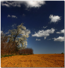 (tozofoto) Tags: travel trees shadow sky travelling nature colors field clouds canon landscape lights europe hungary april agriculture springtime zala tozofoto