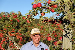IMG_5943 (mavnjess) Tags: 28 may 2016 harvey edward giblett newton orchards manjimup harveygiblett newtonorchards cripps pink lady crippspinklady popaharv eating apple crunch crunchy biting apples pinklady pinkladyapple harv gibbo orchard appleorchard orchardist